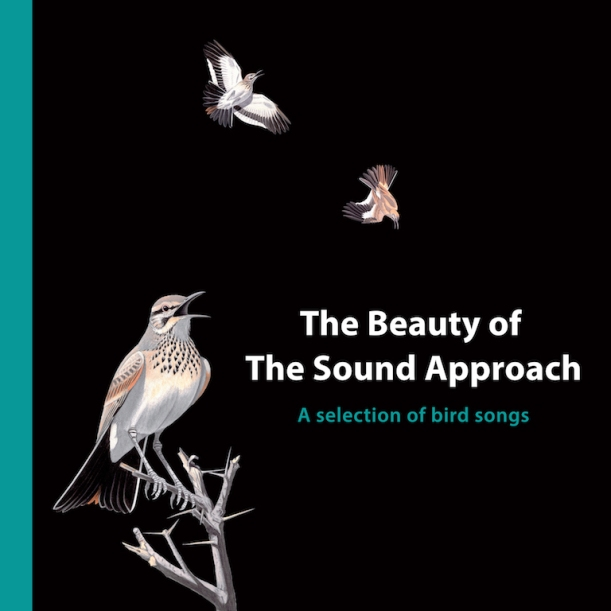 The Beauty Of The Sound Approach